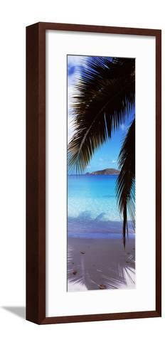 Palm Tree on the Beach, Maho Bay, Virgin Islands National Park, St. John, Us Virgin Islands--Framed Art Print