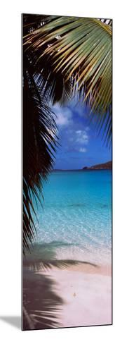 Palm Tree on the Beach, Maho Bay, Virgin Islands National Park, St. John, Us Virgin Islands--Mounted Photographic Print