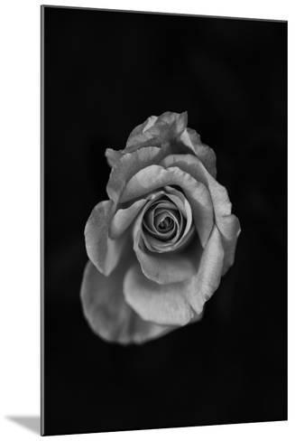 Close-Up of a Rose--Mounted Photographic Print