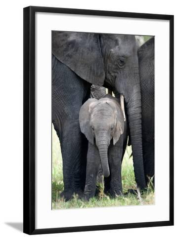 African Elephant (Loxodonta Africana) with its Calf in a Forest, Tarangire National Park, Tanzania--Framed Art Print