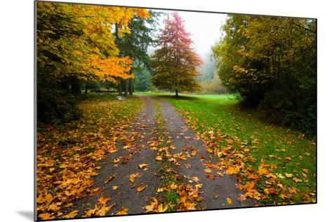 Fallen Leaves on a Road, Washington State, USA--Mounted Photographic Print