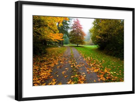 Fallen Leaves on a Road, Washington State, USA--Framed Art Print