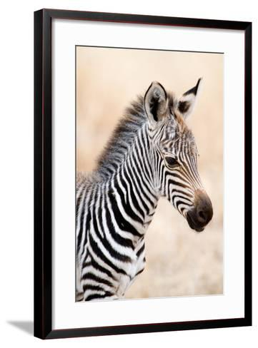Close-Up of a Burchell's Zebra (Equus Burchelli), Ngorongoro Crater, Ngorongoro, Tanzania--Framed Art Print