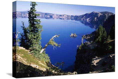 Red Elderberry (Sambucus Racemosa) with Phantom Ship Island in Crater Lake--Stretched Canvas Print