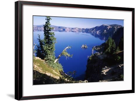 Red Elderberry (Sambucus Racemosa) with Phantom Ship Island in Crater Lake--Framed Art Print