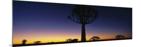 Africa, Namibia, Kokerboom Preserve, Quiver Tree--Mounted Photographic Print