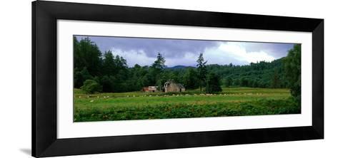Abandoned Farmhouse with Sheep Glen Strathfarrar Highlands Scotland--Framed Art Print