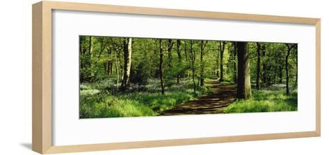 Bluebell Wood Yorkshire England--Framed Art Print