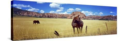 Horses Grazing in a Meadow, Kolob Reservoir, Utah, USA--Stretched Canvas Print
