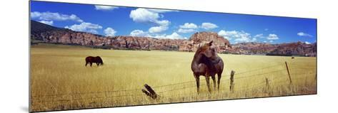 Horses Grazing in a Meadow, Kolob Reservoir, Utah, USA--Mounted Photographic Print