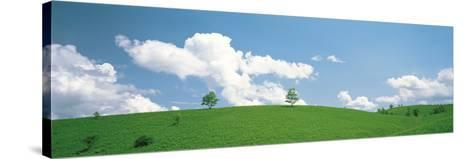 Grassland with Blue Sky and Clouds--Stretched Canvas Print