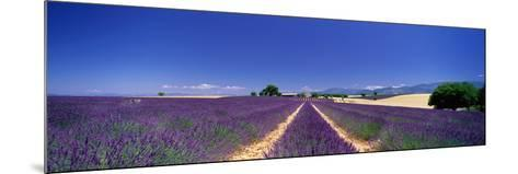 Lavender Field Provence France--Mounted Photographic Print
