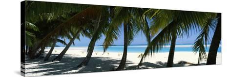 Palm Trees on the Beach, Aitutaki, Cook Islands--Stretched Canvas Print
