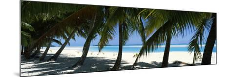 Palm Trees on the Beach, Aitutaki, Cook Islands--Mounted Photographic Print