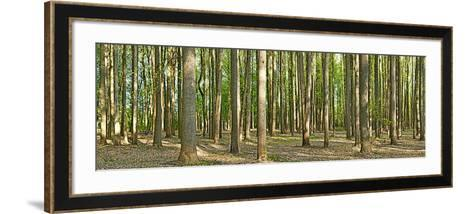 Forest, Washington Crossing State Park, Pennsylvania, USA--Framed Art Print