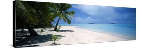 Palm Trees on the Beach, Tapuaetai, Aitutaki, Cook Islands--Stretched Canvas Print
