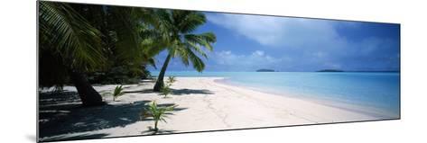 Palm Trees on the Beach, Tapuaetai, Aitutaki, Cook Islands--Mounted Photographic Print