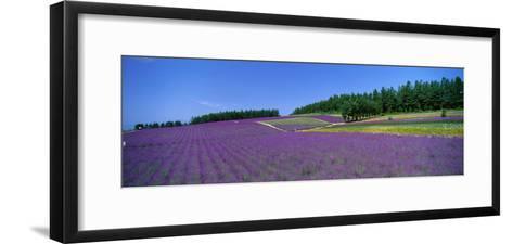 Lavender Field (Nakafurano) Hokkaido Japan--Framed Art Print
