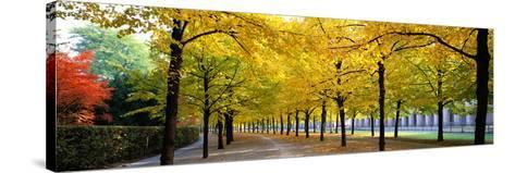 Pathway with Trees Karlsruhe Germany--Stretched Canvas Print