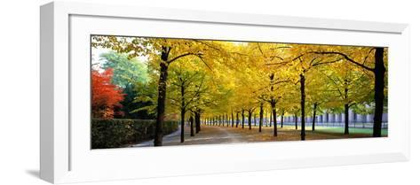 Pathway with Trees Karlsruhe Germany--Framed Art Print