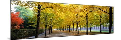 Pathway with Trees Karlsruhe Germany--Mounted Photographic Print