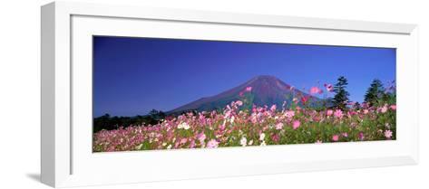Cosmea Mount. Fuji Oshino Yamanashi Japan--Framed Art Print