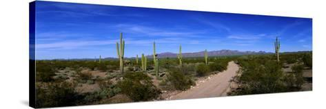 Rugged Road in Sonoran Desert Arizona USA--Stretched Canvas Print