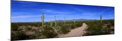 Rugged Road in Sonoran Desert Arizona USA--Mounted Photographic Print