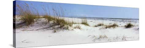 Tall Grass on the Beach, Perdido Key Area, Gulf Islands National Seashore, Pensacola, Florida, USA--Stretched Canvas Print