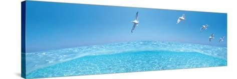 Birds Flying over Sea--Stretched Canvas Print