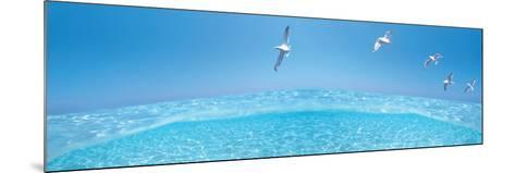 Birds Flying over Sea--Mounted Photographic Print