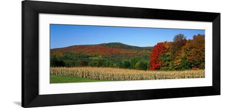 Ripe Corn Autumn Leaves Vermont USA--Framed Art Print