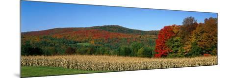Ripe Corn Autumn Leaves Vermont USA--Mounted Photographic Print