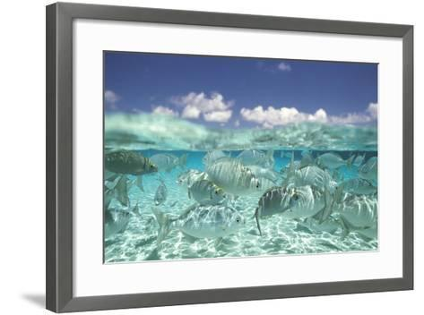 School of Fish, Submerged--Framed Art Print