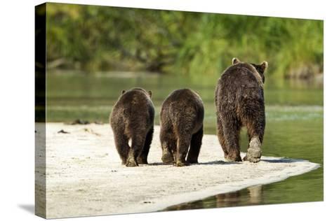 Brown Bear and Cubs, Katmai National Park, Alaska--Stretched Canvas Print