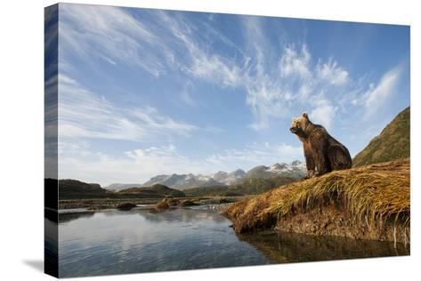 Brown Bear and Mountains, Katmai National Park, Alaska--Stretched Canvas Print