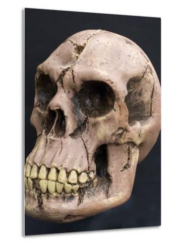 Neanderthal or Neandertal Man - Reconstructed Skull--Metal Print