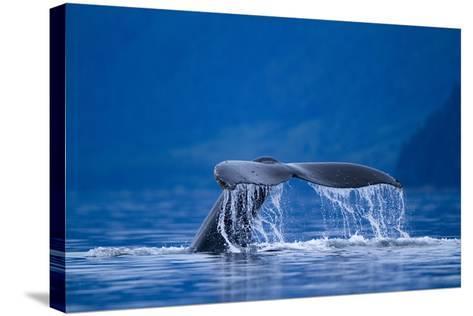 Humpback Whale, Alaska--Stretched Canvas Print