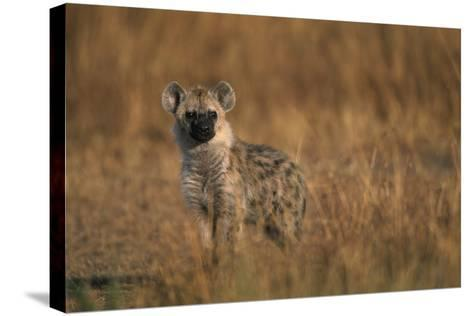 Spotted Hyena Pup--Stretched Canvas Print