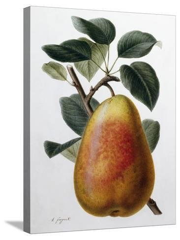 Study of a Pear-Adrienne Faguet-Stretched Canvas Print