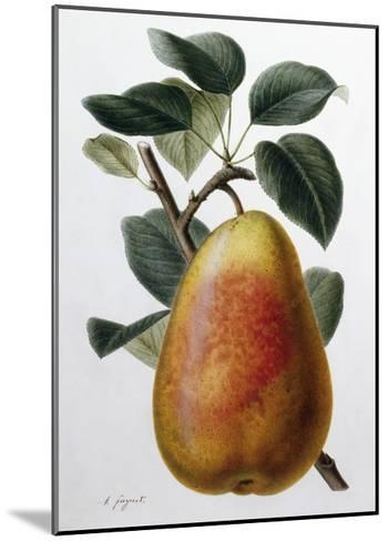 Study of a Pear-Adrienne Faguet-Mounted Giclee Print