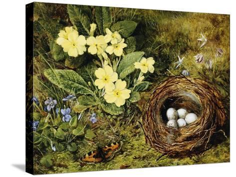 Primroses with a Bird's Nest-H. Bernard Grey-Stretched Canvas Print