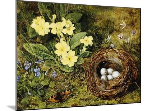 Primroses with a Bird's Nest-H. Bernard Grey-Mounted Giclee Print
