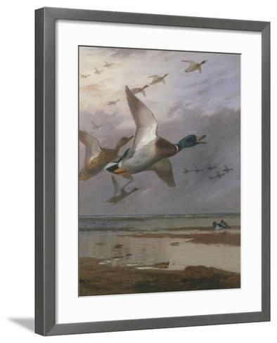 Duck Rising-Archibald Thorburn-Framed Art Print