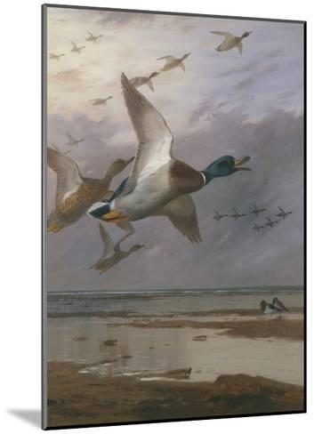 Duck Rising-Archibald Thorburn-Mounted Giclee Print