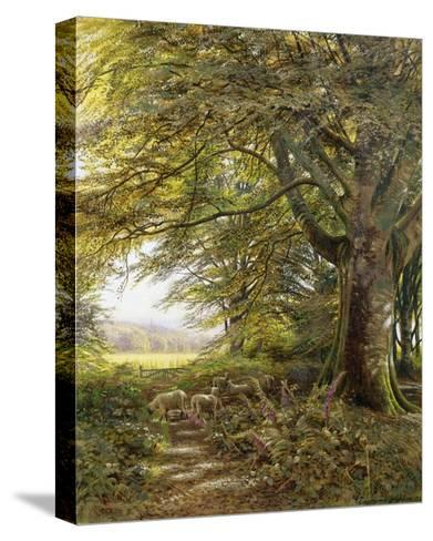 A Wooded Landscape with Foxgloves-Edmund George Warren-Stretched Canvas Print