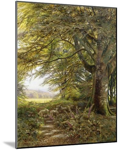 A Wooded Landscape with Foxgloves-Edmund George Warren-Mounted Giclee Print