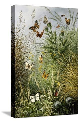 The Butterflies' Haunt (Dandelion Clocks and Thistles)-William Scott Myles-Stretched Canvas Print