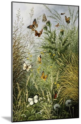 The Butterflies' Haunt (Dandelion Clocks and Thistles)-William Scott Myles-Mounted Giclee Print