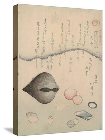 Aragai, Masu?gai, Anagai: Clams-Totoya Hokkei-Stretched Canvas Print